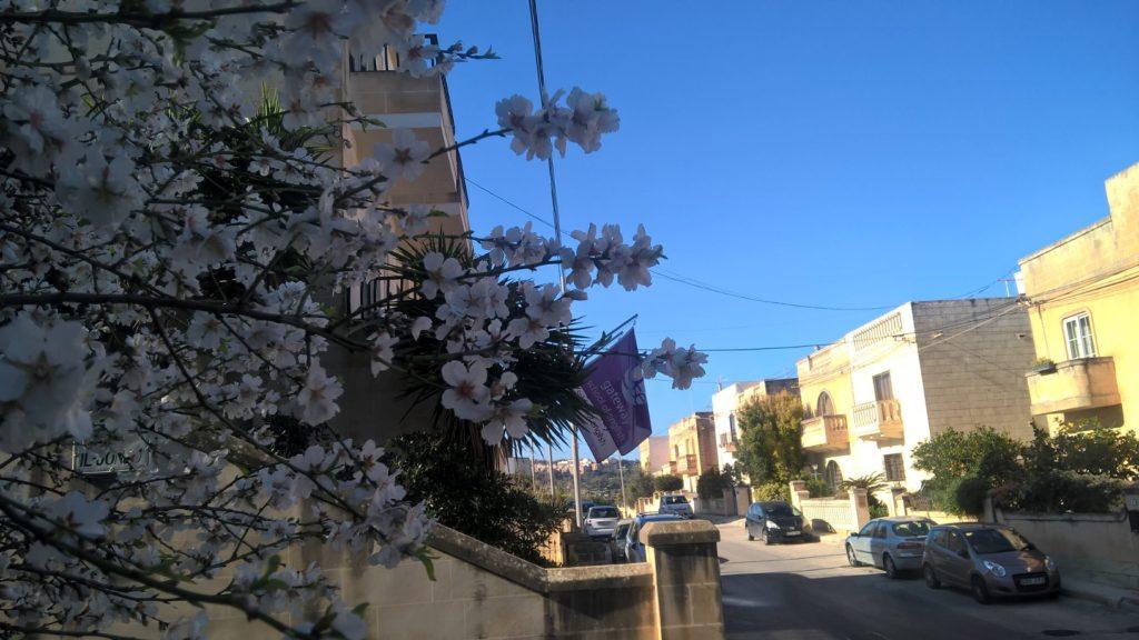 GSE internationale englische Schule in Malta um Englischkurse in St Julians zu lernen